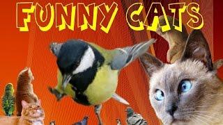 Funny Cats 6, Смешные коты, Реакция на Птиц !!!