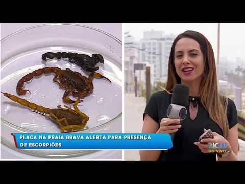 Mais de 300 escorpiões são encontrados na praia em Itajaí