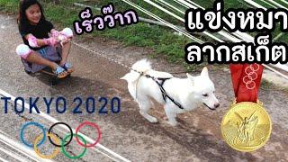 แข่งหมาลากเซิร์ฟบอร์ด โอลิมปิคน้องหมา ใครจะได้เหรียญทอง Olimpic Dogo   เจไจ๋แปน J Jai Pan