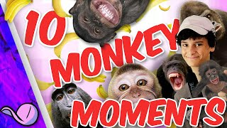 Top 10 Monkey Moments