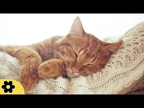 8 Hour Sleep Music, Calm Music for Sleeping, Delta Waves, Insomnia, Relaxing Music, ✿011C