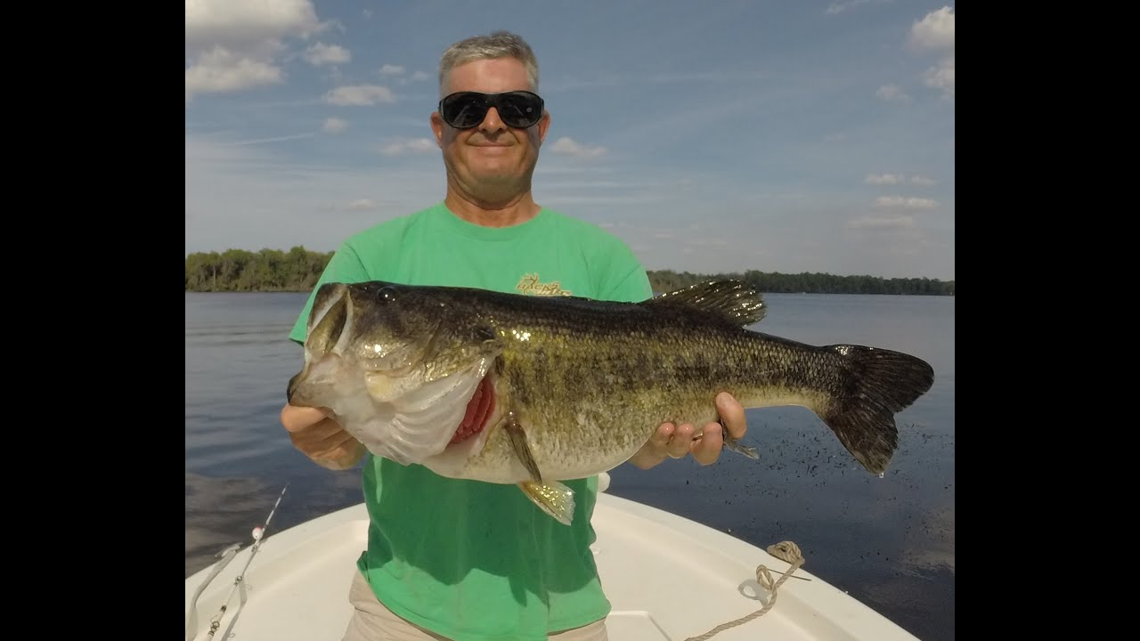 Shiner fishing for big bass on the st johns river youtube for Buy florida fishing license online