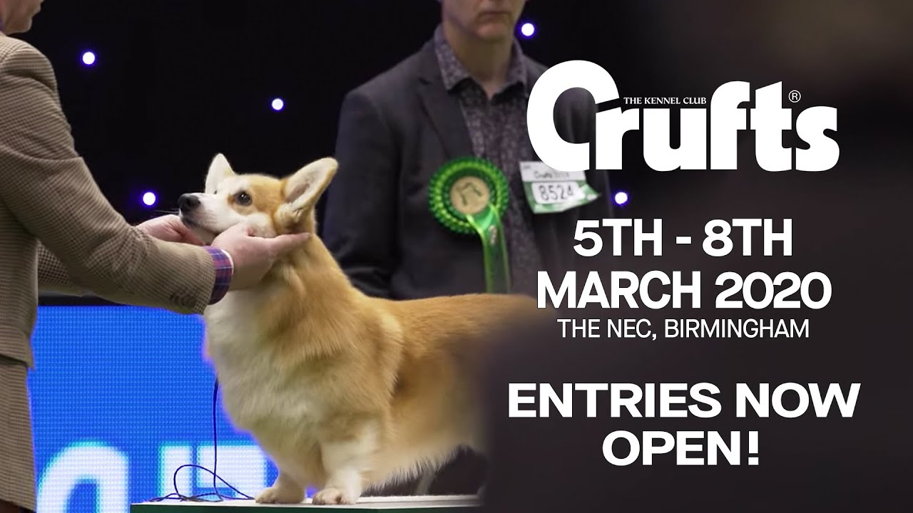 Watch Westminster Dog Show 2020.Entries For Crufts 2020 Are Open