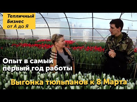 Тюльпан к 8 марта! Сколько можно заработать на выгонке тюльпанов