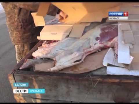 Мясо без документов
