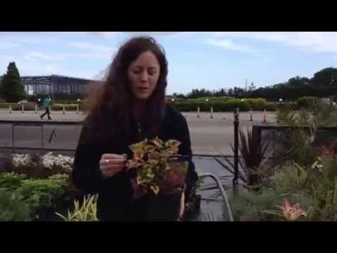 Coastal plants from Bella bloom Tully Nurseries