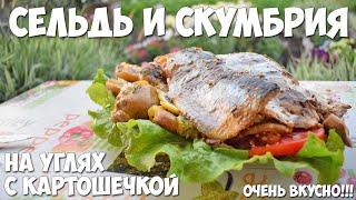 Вкусная рыба на углях в фольге (Сельдь и Скумбрия)