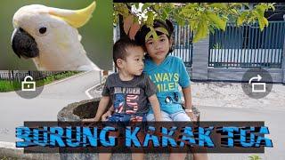 Burung kakak tua    lagu Anak Indonesia paling popoler