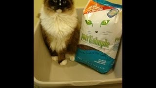 Purr & Simple All Natural Cat Litter Product Review - ねこ - ラグドール - Floppycats