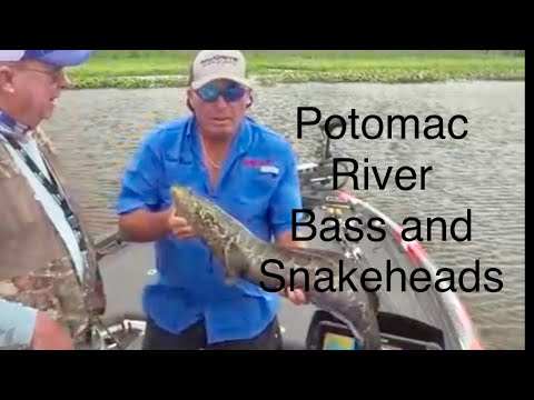 potomac-river-bass-and-snakeheads