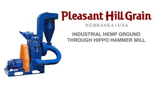 Industrial hemp ground in Hippo mill