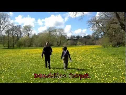 Bach-Y-Graig A Woodland Walk With Westons Wales,Abandoned.