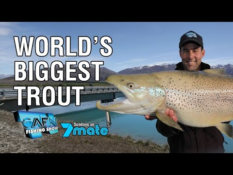 World's Biggest Trout Caught On Camera?