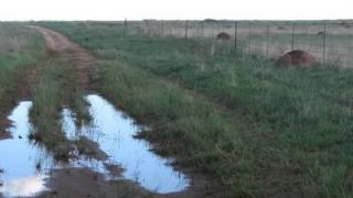Farms For Sale in Bloemfontein, Bloemfontein, South Africa for ZAR R 5 800 000