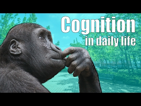 Cognition in Daily Life