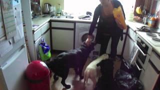 Dog Commands - Part 1