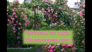 Прогулка по саду. Обзор сортов цветущих роз.