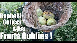 Raphaël Colicci , une ode aux fruits oubliés ! Terra Incognita 2016 jour 7- www.regenere.org