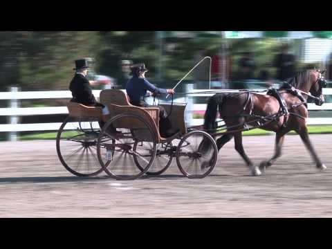 Ladies Single Horse Progressive Obstacles