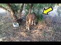 Policija je pronašla PONIJA zavezanog za drvo.Kada su se približili, ostali su bez TEKSTA !