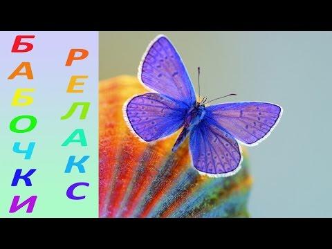 Самые красивые бабочки мира, релакс [HD] - видео онлайн