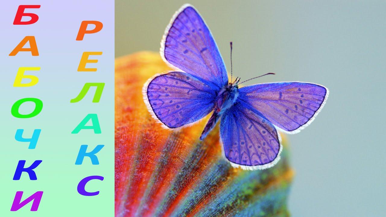 фото бабочки самые красивые