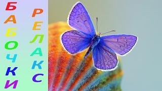 Самые красивые бабочки мира, релакс [HD]
