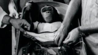 Almanac: Space chimp