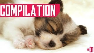 Cute Animals Compilation - July 2018