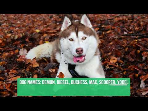 Dog & Puppy Names From Dog Movies