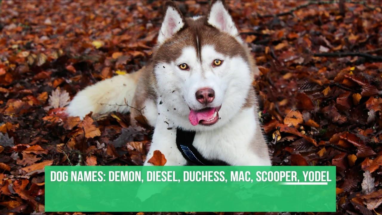 Dog Name Generator Search Names