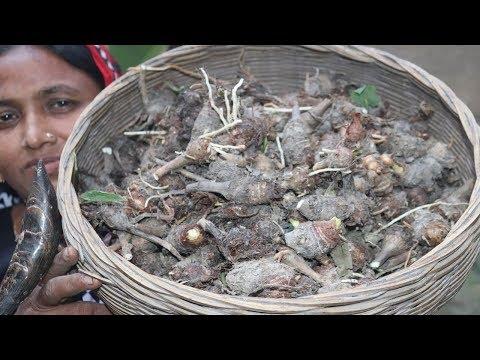 Village Food Farm Fresh Taro Root Recipe Healthy & Tasty Kochur Mukhi Cooking Fresh Taro Root Curry