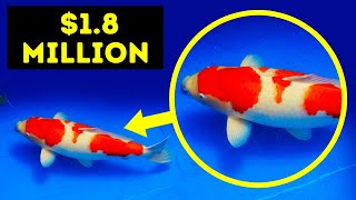 If You Want to be Rich, Have This Fish as Your Pet