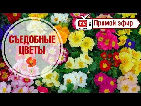 Вышивка лентами мастер классиз YouTube · Длительность: 6 мин7 с  · Просмотры: более 3.000 · отправлено: 25.07.2014 · кем отправлено: Геннадий Ручкин