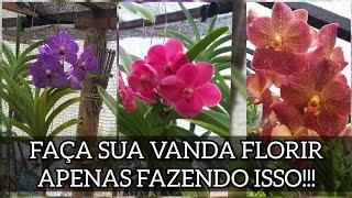 Como Fazer A Orquídea Vanda Florir Intensamente