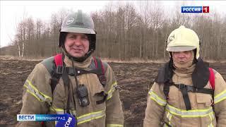 Калининградская область вошла в тройку регионов с самым большим количеством палов сухой травы