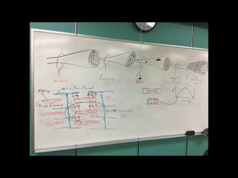 Recorded lecture - Muscle tissues