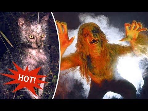 Cryptozoology Top 10 Chernobyl Mutations Animals Most Shocking