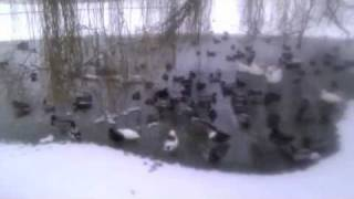 Wat Vogels Gastvlog #2 BLOOPER