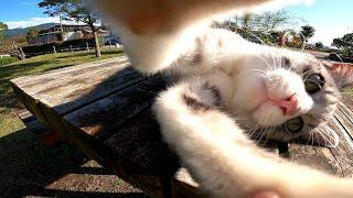公園のベンチで寝ている野良猫が可愛過ぎる