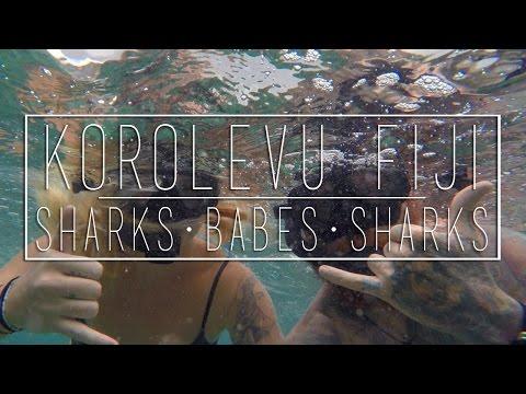 SHARKS and BABES and SHARKS!!!!! - Korolevu, Fiji (Gopro hero4)