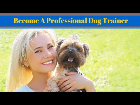 How To Become A Professional Dog Trainer - Work With Animals - YouTube