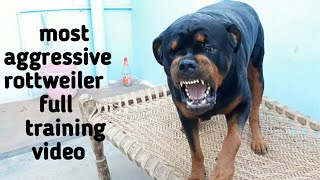 Dog training video||best guard dog breed||well trained rottweiler.