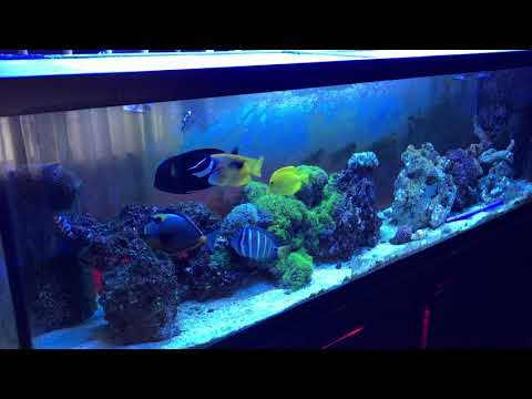 saltwater aquarium forum news | rotter tube reef