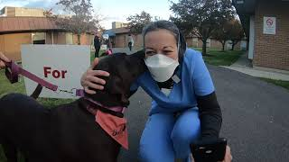 Gentle dogs comfort front line healthcare workers