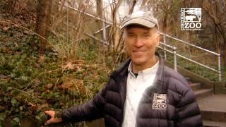 Roo Valley - More Home to Roam - Cincinnati Zoo
