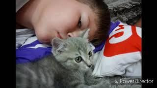 Фото ЛАЙКИ и Принцессы