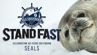 Video Stand Fast: 40 Years Defending Seals download MP3, 3GP, MP4, WEBM, AVI, FLV Juni 2018