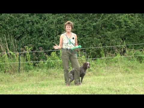 German S/H Pointer learning to retrieve from left and right