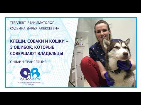 Вопрос: Если выпускать кошку на улицу обязательно делать прививку?